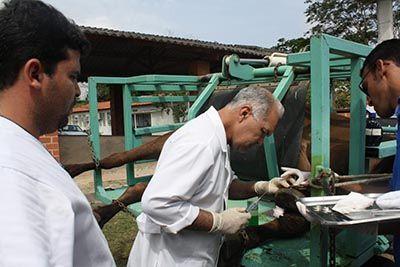 Concurso Ministério da Agricultura 2017