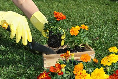 Curso de Jardineiro Senac
