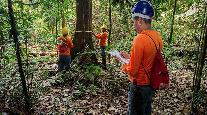Curso Gratuito Técnico em Florestas 2018