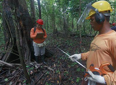 Técnico em Floresta o que faz