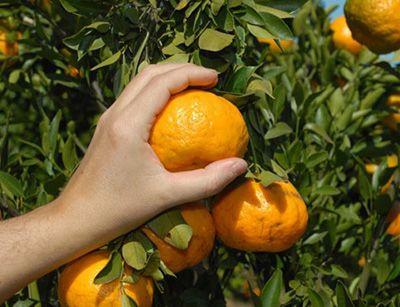 Técnico em Fruticultura o que faz