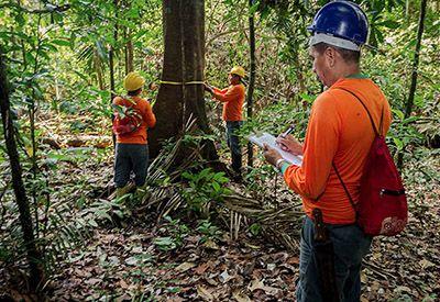 Curso Técnico em Floresta 2019