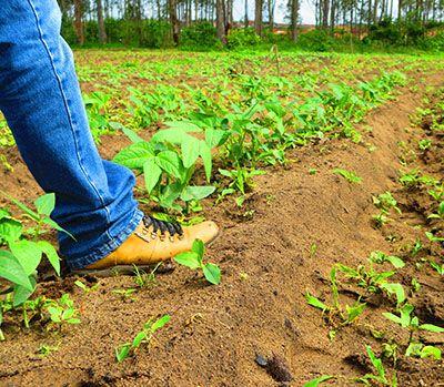 Inscrição Curso Gratuito Técnico em Agricultura 2019