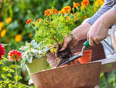 Jardinagem e Paisagismo o que faz