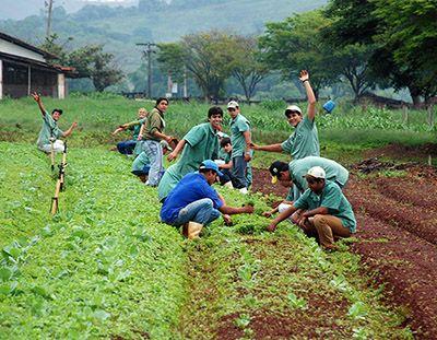 Técnico em Agricultura o que faz