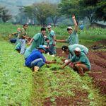 Curso Gratuito com Certificado de Técnico em Agropecuária 2019
