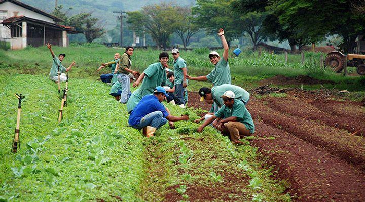 Curso Gratuito Com Certificado De Tecnico Em Agropecuaria 2019 If