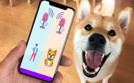 Aplicativo que Traduz Latidos de Cachorros vira Febre: Veja o teste e como baixar